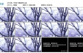 高清实拍视频素材丨雪花纷飞覆盖树枝
