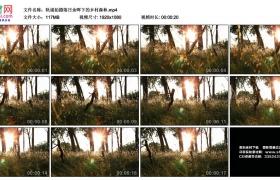 高清实拍视频丨轨道拍摄落日余晖下的乡村森林