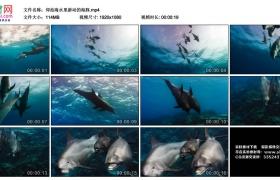 高清实拍视频丨仰拍海水里游动的海豚