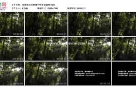 高清实拍视频素材丨摇摄阳光从树缝中照射进森林