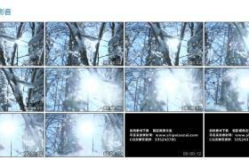 高清实拍视频素材丨雪花飘落在树林中慢镜头