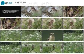 [高清实拍素材]小鸟一组