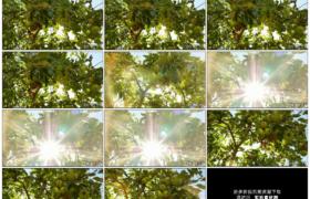 高清实拍视频素材丨明亮阳光照射挂着青苹果的苹果树