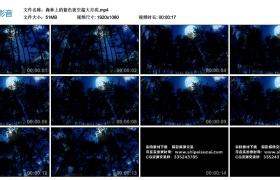 【高清实拍素材】森林上的蓝色夜空超大月亮