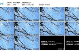 高清实拍视频素材丨阳光照耀下,树枝上的雪花飘落
