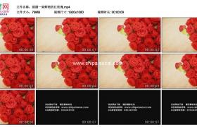 高清实拍视频素材丨摇摄一束鲜艳的红玫瑰