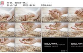 高清实拍视频素材丨小麦麦粒从手中掉落