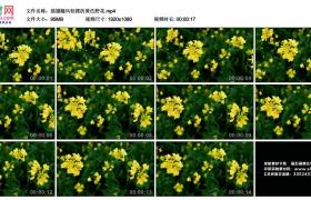 高清实拍视频丨摇摄随风轻摆的黄色野花