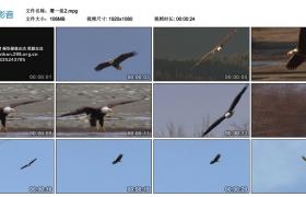 [高清实拍素材]鹰一组2