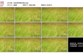高清实拍视频丨高高的野草随风摆动