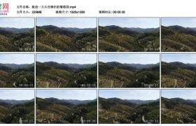高清实拍视频丨航拍一大片在梯田的葡萄园