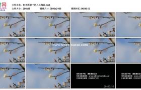 4K实拍视频素材丨阳光照射下的几点梅花