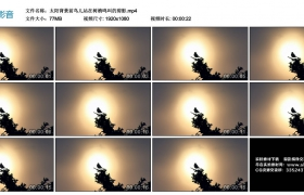 高清实拍视频丨太阳背景前鸟儿站在树梢鸣叫的剪影