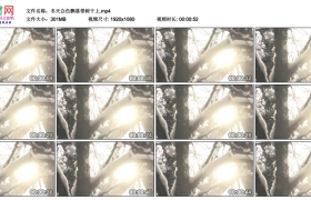 高清实拍视频丨冬天白雪飘落带树干上
