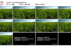 高清实拍视频丨村庄农田里绿油油的麦苗