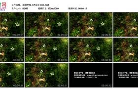 高清实拍视频丨摇摄草地上两朵小白花