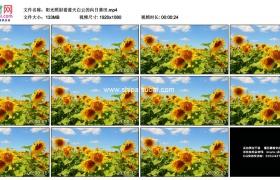 高清实拍视频素材丨阳光照射着蓝天白云的向日葵田