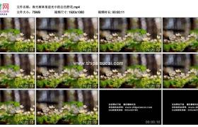 高清实拍视频素材丨春天树林里逆光中的白色野花