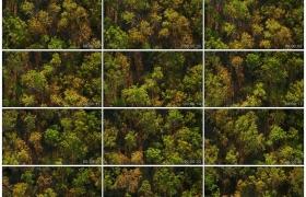 4K实拍视频素材丨航拍阳光照射下秋天的树林