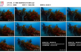 高清实拍视频丨水下摄影 海底鲜艳的水草及藻类