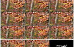 高清实拍视频素材丨秋天树林里挂着黄叶的树木