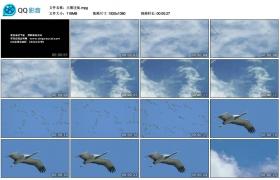[高清实拍素材]大雁迁徙