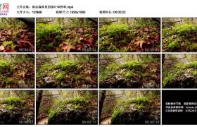 高清实拍视频丨雨后森林里的落叶和野草