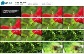 [高清实拍素材]蜻蜓一组