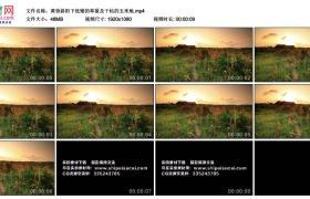 高清实拍视频丨黄昏斜阳下低矮的草屋及干枯的玉米地