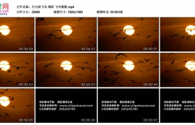 高清实拍视频素材丨日出惊飞鸟 朝阳 飞鸟剪影