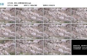 高清实拍视频素材丨树枝上的樱花随风摆动