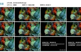 高清实拍视频素材丨挂在枝头的西红柿