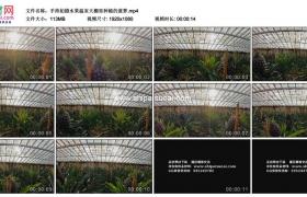 高清实拍视频素材丨手持拍摄水果温室大棚里种植的菠萝