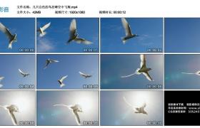 高清实拍视频素材丨几只白色的鸟在晴空中飞翔