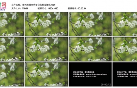 高清实拍视频丨春天的微风吹着白色梨花摆动