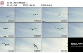高清实拍视频素材丨晴空下海鸥振翅飞翔