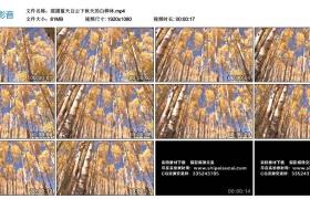 高清实拍视频丨摇摄蓝天白云下秋天的白桦林