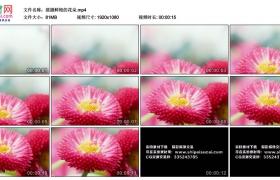 高清实拍视频丨摇摄鲜艳的花朵