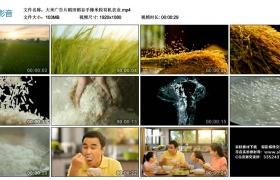 高清广告丨大米广告片稻田稻谷手捧米粒有机农业