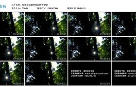 高清实拍视频丨阳光穿过森林里的树干