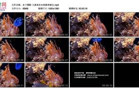 高清实拍视频素材丨水下摄影 几条鱼在水里游来游去