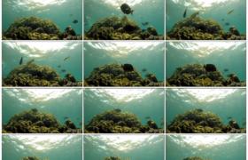 高清实拍视频素材丨水下摄影 海底珊瑚礁中五颜六色的鱼游动