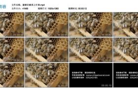 高清实拍视频丨蜜蜂在蜂房上忙碌