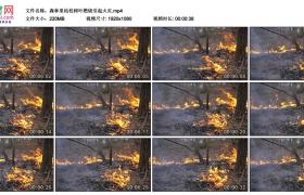 高清实拍视频素材丨森林里枯枝树叶燃烧引起火灾