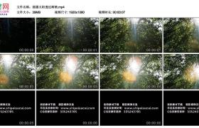高清实拍视频丨摇摄太阳透过树梢