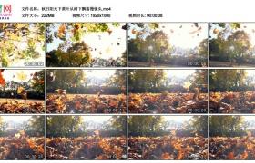 高清实拍视频丨秋日阳光下黄叶从树下飘落慢镜头