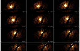4K实拍视频素材丨夜晚一轮明月从树枝空隙间缓缓升起延时摄影