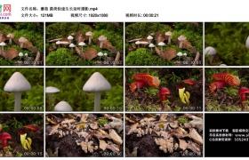 高清实拍视频丨蘑菇 菌类快速生长延时摄影