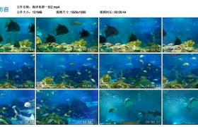 【高清实拍素材】海洋鱼群一组2