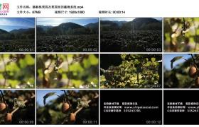 高清实拍视频丨猕猴桃果园及果园里的灌溉系统